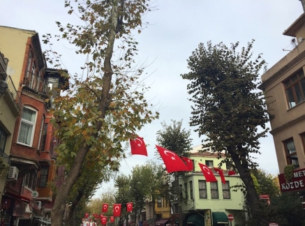 trees with some Turkish flags